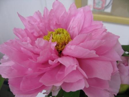 お花咲きまくりです_d0337981_15354254.jpg
