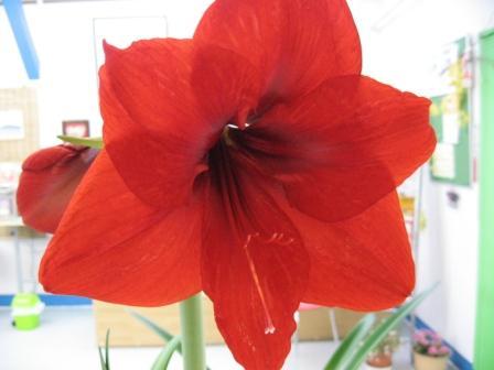 お花咲きまくりです_d0337981_15354270.jpg