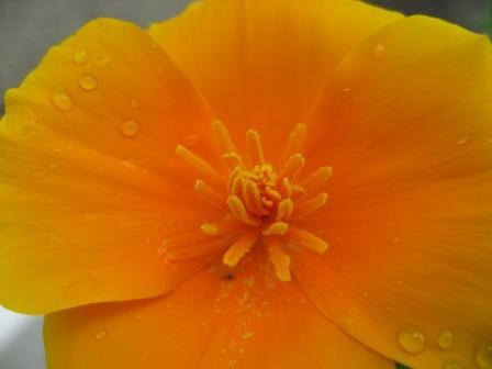 お花咲きまくりです_d0337981_15354300.jpg