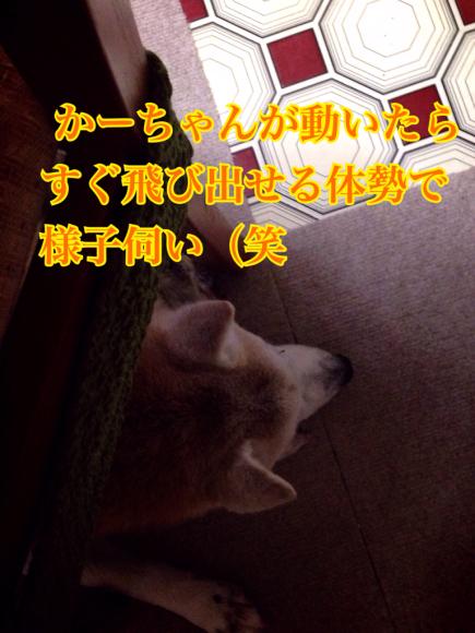 c0359535_15545903.jpg