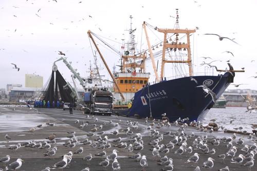 ある日の釧路港風景 9月6日_f0113639_1818434.jpg