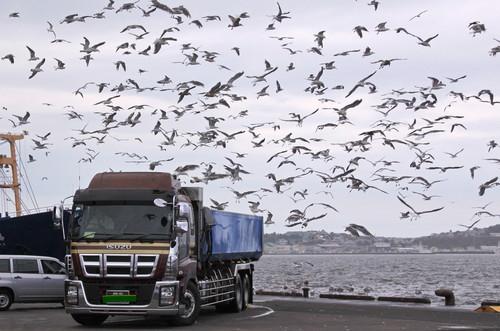 ある日の釧路港風景 9月6日_f0113639_18192719.jpg