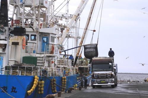 ある日の釧路港風景 9月6日_f0113639_1819898.jpg