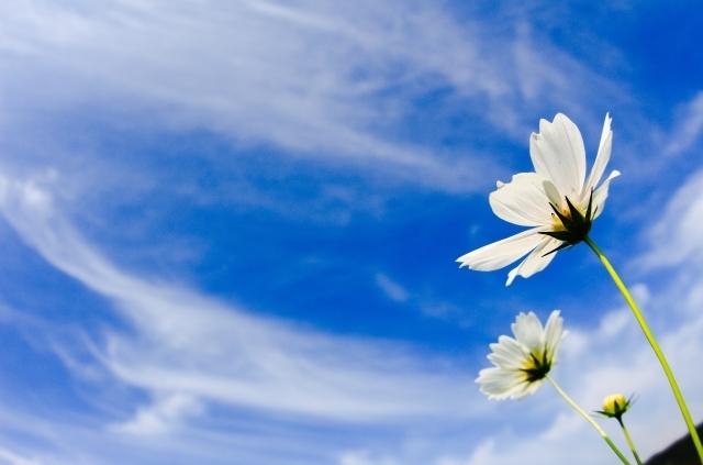 プチ瞑想をしてみると…。~自然の音に耳を澄まして(^^)~_b0298740_15321617.jpg
