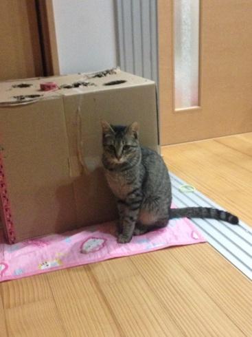 幸せになった猫の話_b0137969_06535015.jpg