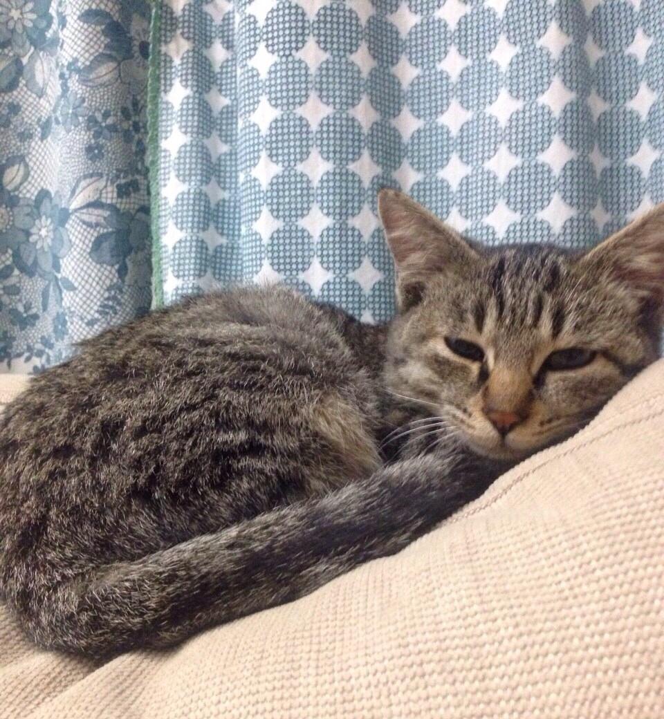 幸せになった猫の話_b0137969_06560728.jpg