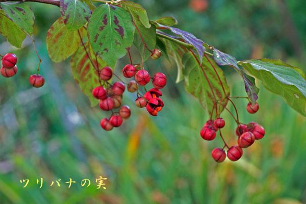 秋の空_d0162994_13594392.jpg