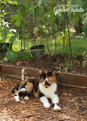 菜園と花壇の様子(8月中旬~9月上旬)_b0253205_02054437.jpg