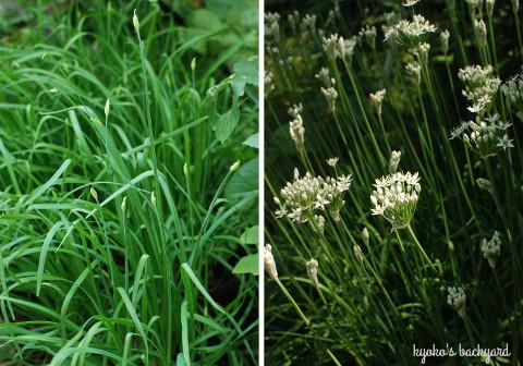 菜園と花壇の様子(8月中旬~9月上旬)_b0253205_02132166.jpg