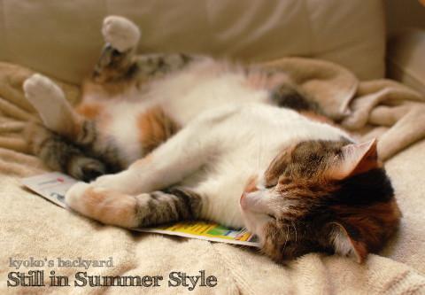 9月の猫の開き_b0253205_03025642.jpg