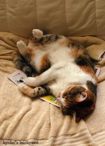 9月の猫の開き_b0253205_03031557.jpg