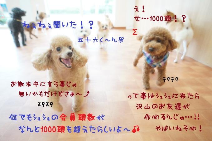 d0220513_15321031.jpg