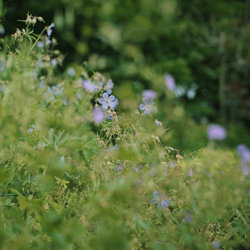 素敵な庭を訪れた日のこと_b0212922_2140165.jpg