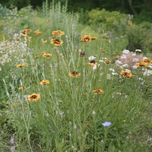 素敵な庭を訪れた日のこと_b0212922_21402582.jpg