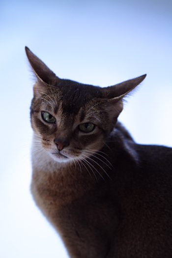 [猫的]ポートレート浮世絵_e0090124_0152948.jpg