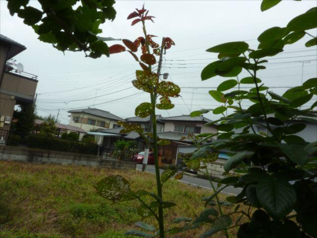 雨の合間に_f0032332_201940.jpg