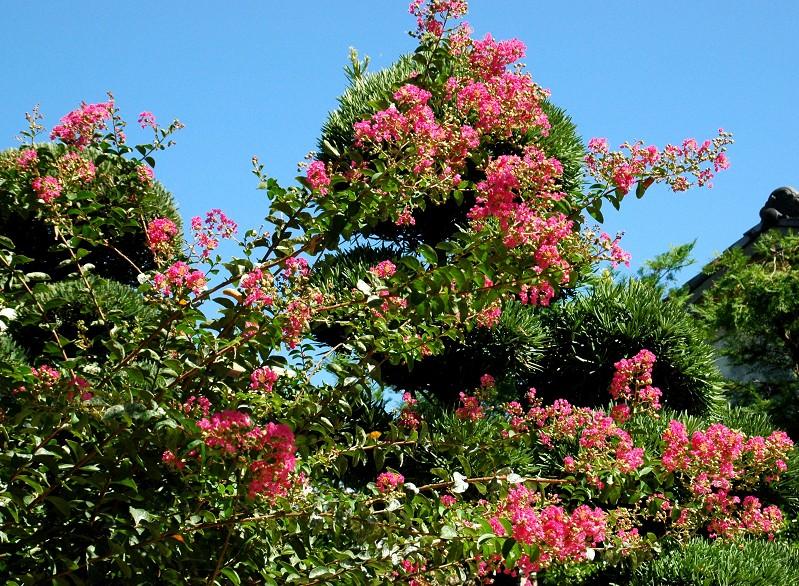 花のある風景_b0093754_20332855.jpg