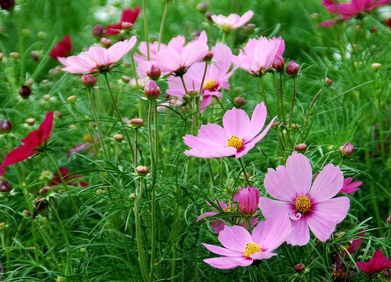 花のある風景_b0093754_20341636.jpg
