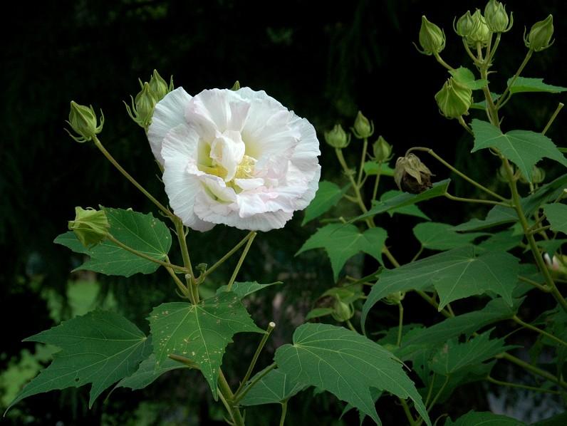 花のある風景_b0093754_2034301.jpg