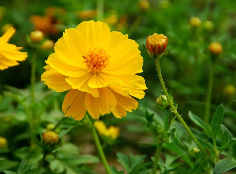 花のある風景_b0093754_20344578.jpg