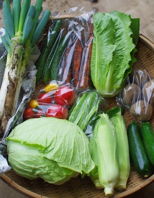 今週の野菜セット(9/8~9/12着)_c0110869_14195450.jpg