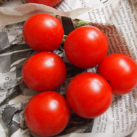 調理用トマト色々_a0292194_1137052.jpg