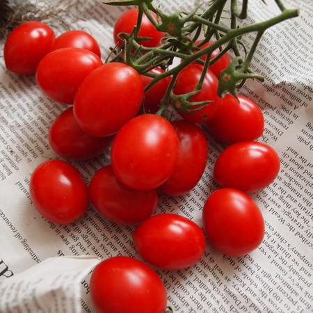 調理用トマト色々_a0292194_11504919.jpg