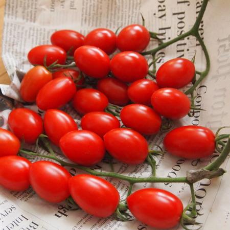 調理用トマト色々_a0292194_1151941.jpg