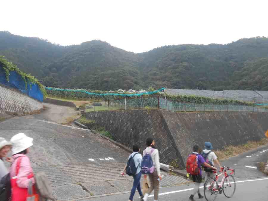 2015奥野田ワイナリー桜沢シャルドネ収穫会_a0095931_8595532.jpg