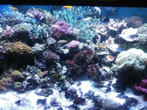 旅する水族館_d0220957_18201276.jpg