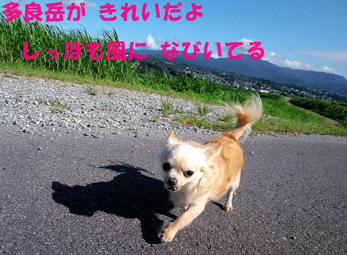 c0025171_12494799.jpg
