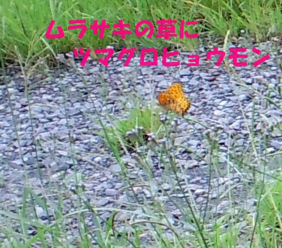 c0025171_12501465.jpg