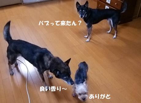 b0127675_16463652.jpg