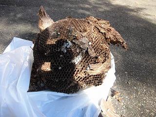 城南パーク 蜂の巣を駆除しました_d0027501_15472752.jpg