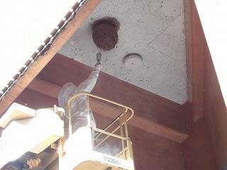 城南パーク 蜂の巣を駆除しました_d0027501_1547678.jpg