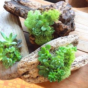 植物ワークショップ3daysのご案内_d0263815_13543217.jpg