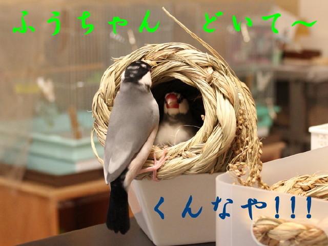 c0365734_20422081.jpg