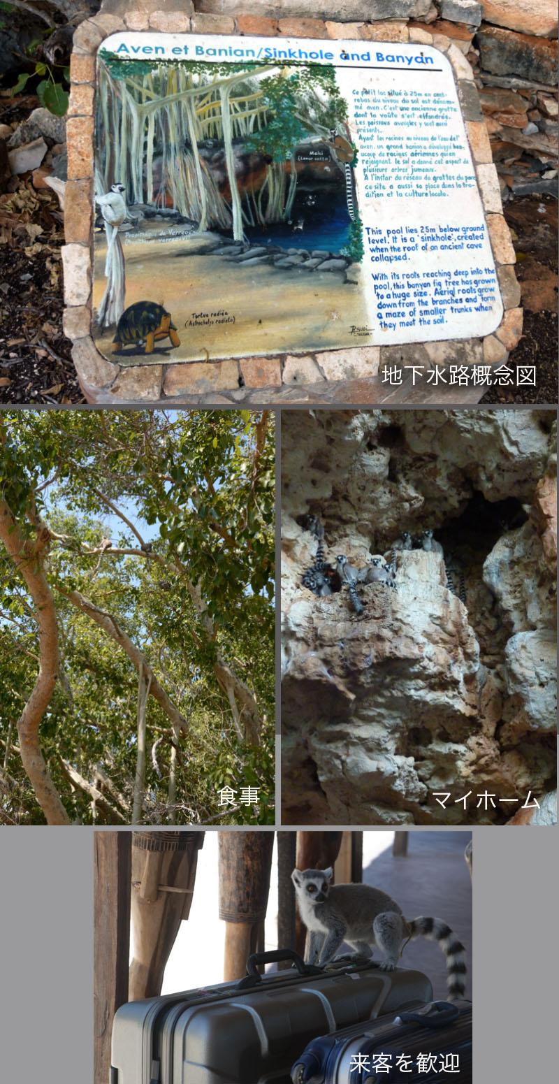 地下水脈とワオキツネザルの関係_f0103459_123133.jpg