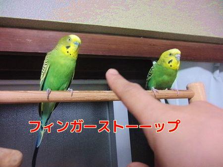 f0196665_13252100.jpg