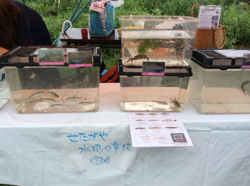 2015年8月29日『夏の多摩川チャレンジ』多摩川水族館_c0091679_12523541.jpg