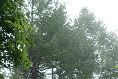 台風の影響で大雨_d0133485_1271372.jpg