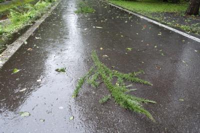 台風の影響で大雨_d0133485_1281890.jpg