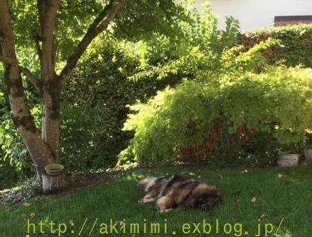 b0245488_01332763.jpg