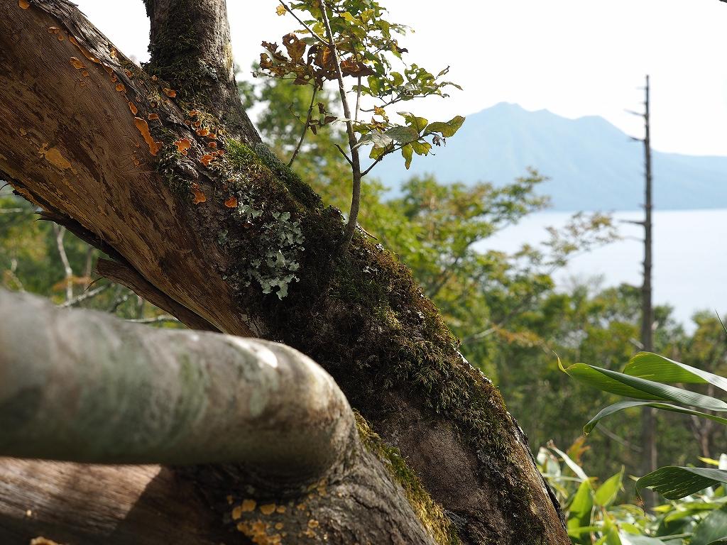 イチャンコッペ山、9月8日_f0138096_21445691.jpg