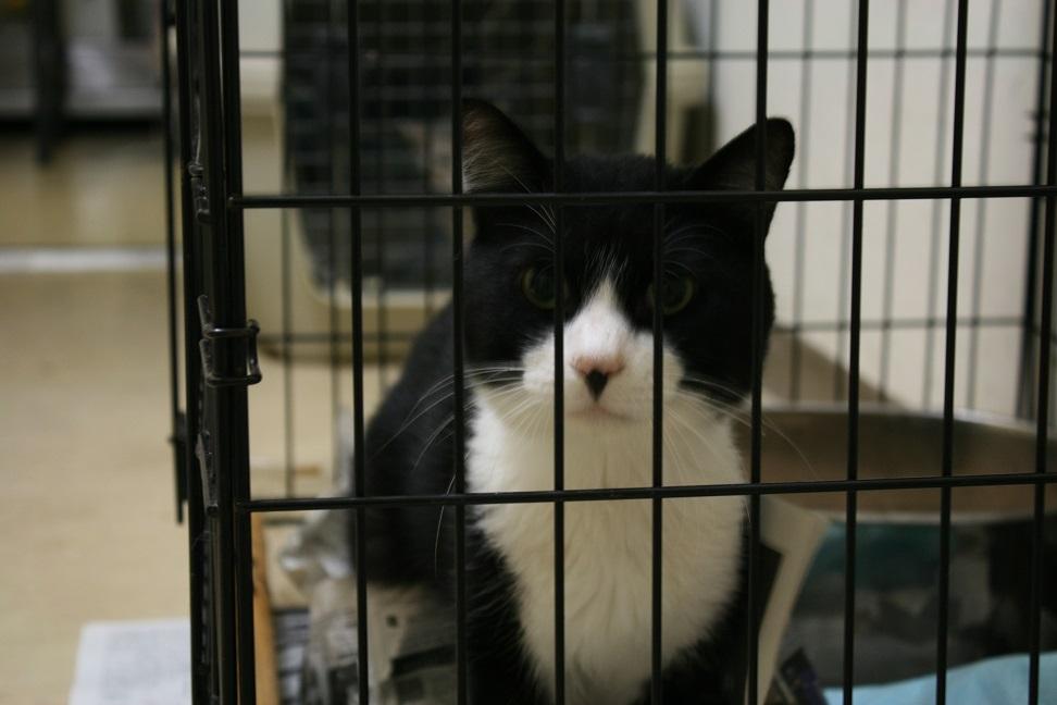 【移動先募集】センターの猫たち(9/5訪問)_f0242002_1444179.jpg