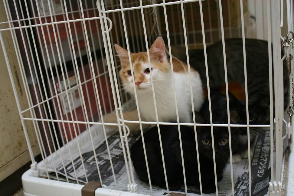 【移動先募集】センターの猫たち(9/5訪問)_f0242002_14452543.jpg