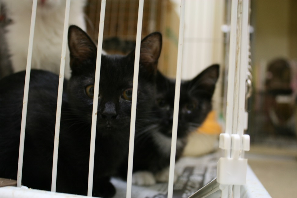 【移動先募集】センターの猫たち(9/5訪問)_f0242002_14453184.jpg