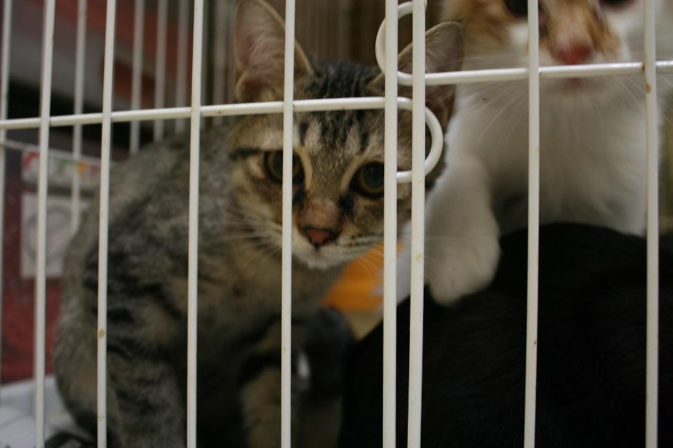 【移動先募集】センターの猫たち(9/5訪問)_f0242002_14453877.jpg