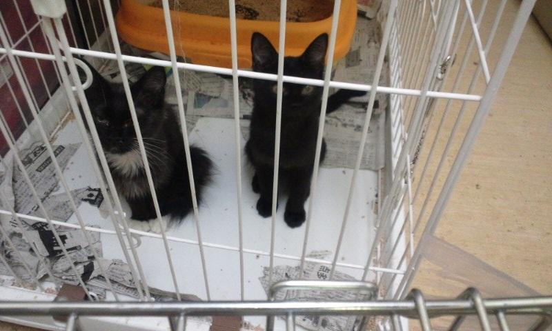 【移動先募集】センターの猫たち(9/5訪問)_f0242002_14455190.jpg