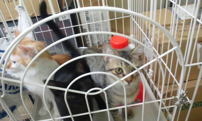【移動先募集】センターの猫たち(9/5訪問)_f0242002_14461122.jpg